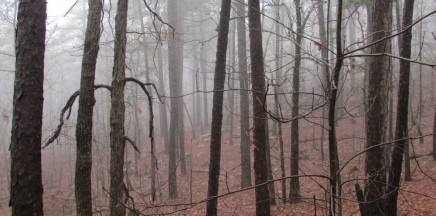 Ouachita National Forest, Western Arkansas