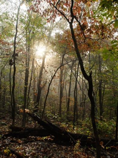 The Ozark Highlands Trail