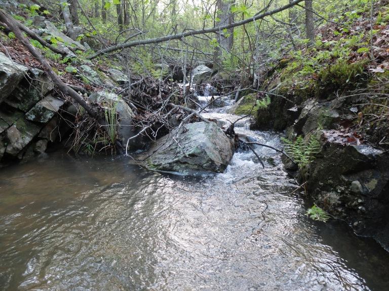 Blocker Creek at twilight