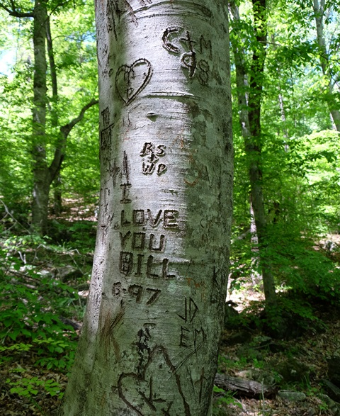 A very appropriate message carved into one of the large beech trees on the Hemmed-In Hollow trail
