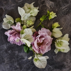 Lavender Roses and White Bougainvillea