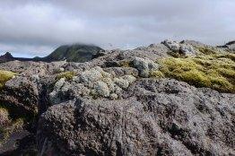 Stone Moss and Lichen
