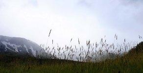 Thorsmork Grasses
