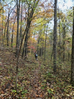 The Lost Girls hike through the brilliant colors of the Ozark National Forest