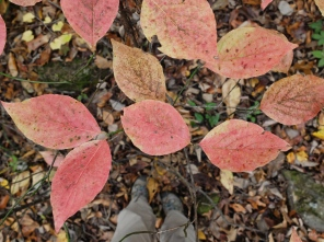 Fall foliage on the trail