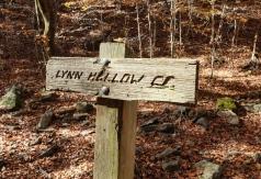 Lynn Hollow