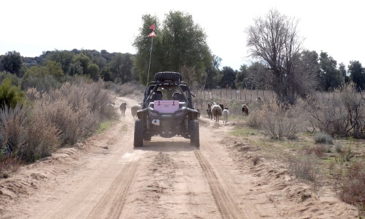 Tiberio and Suzanna lead the way through a herd of sheep on a dusty road outside of La Rumorosa. That's Suzanna's signature pink Yeti cooler.